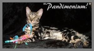 Pandimonium, lounging