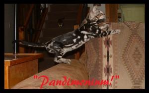 Pandimonium, playful