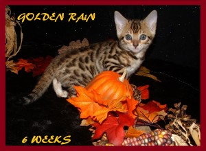 SEcond 2 Golden Rain pic 2