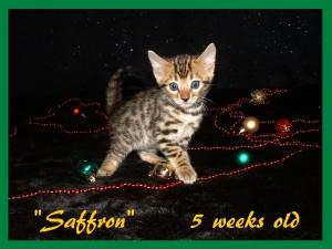 Saffron, baby doll