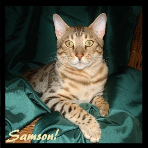 Samson, best face picture