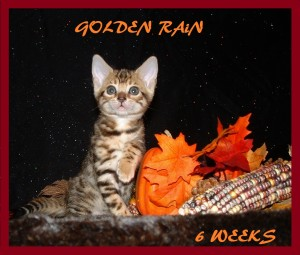Second 2 Golden Rain 1