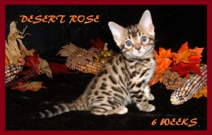 Second DEsert Rose pic 2