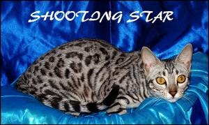 Shooting Star blue silk