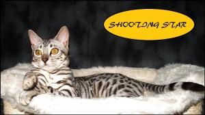 Shooting Star on hammock