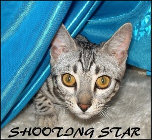 Shooting Star plays peek-a-boo