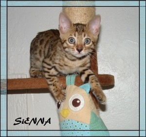 Sienna playing with Owl 1