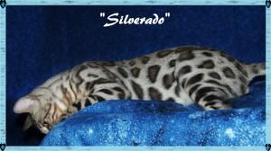 Silverado, peeking