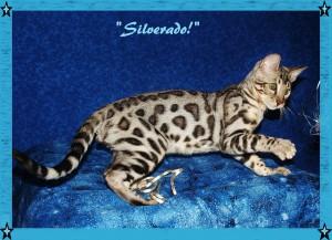Silverado, play mode