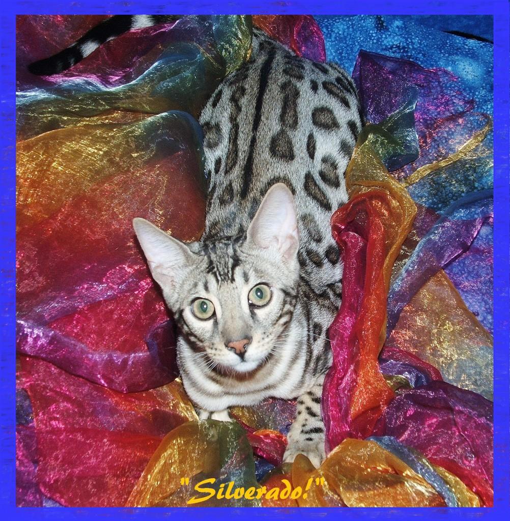Silverado, showing his back