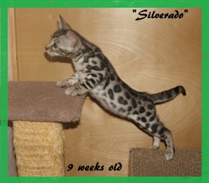 Silverado, stretched