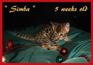 Simba green silk