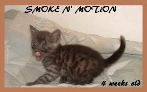 Smoke N' Motion with tongue out