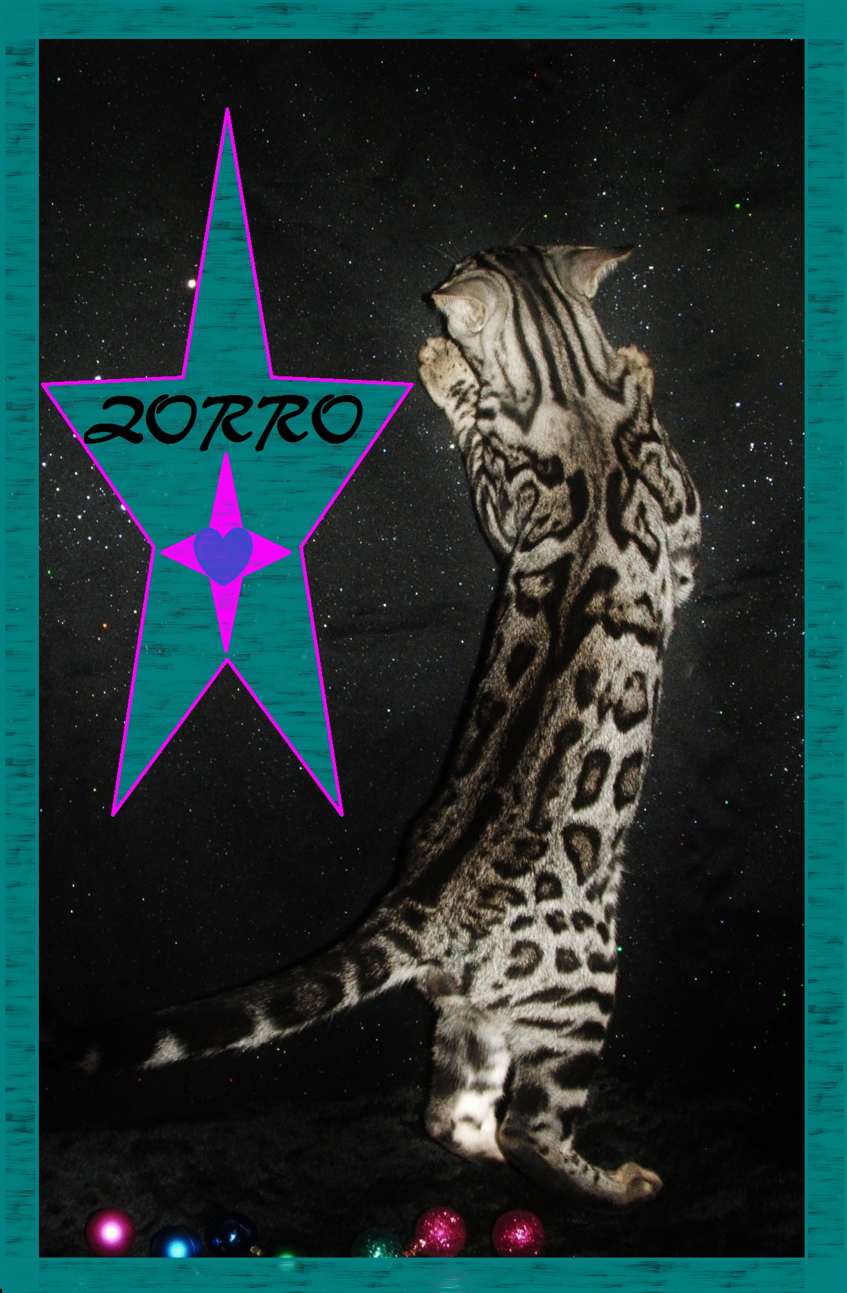 Zorro, back pattern