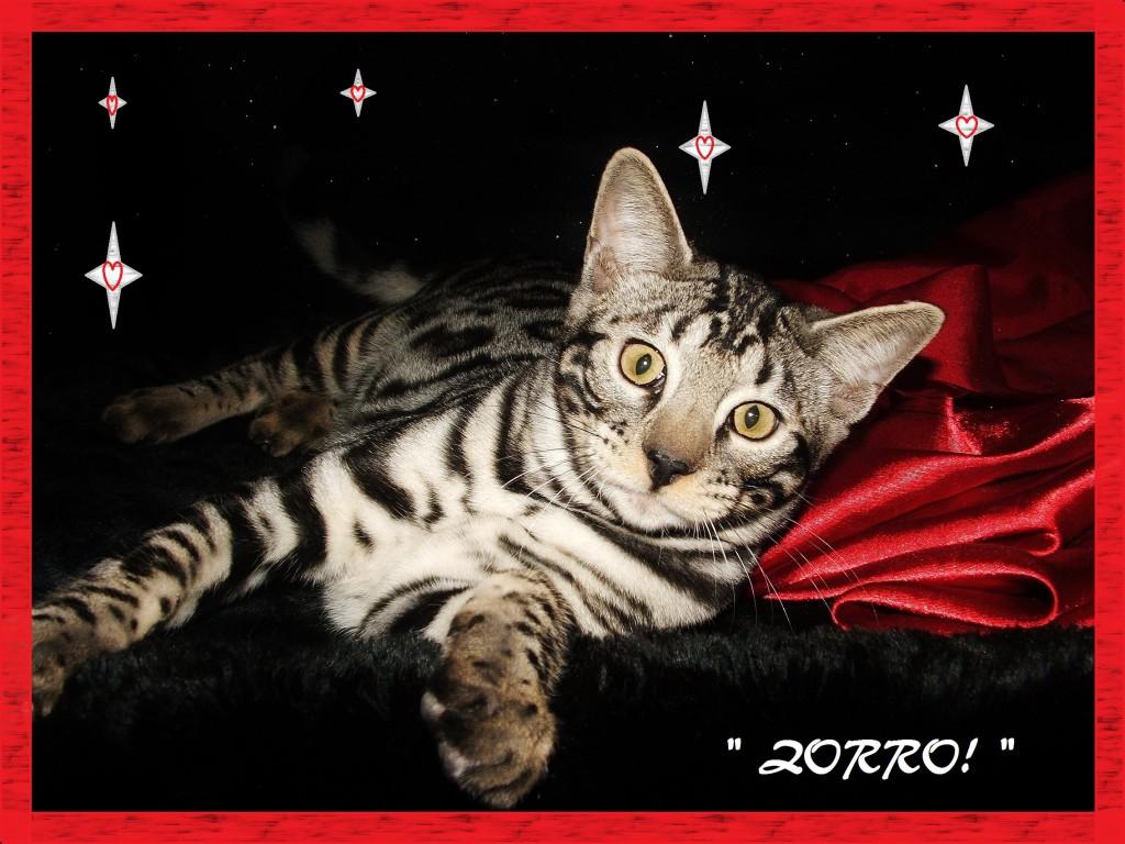 Zorro, come and play!
