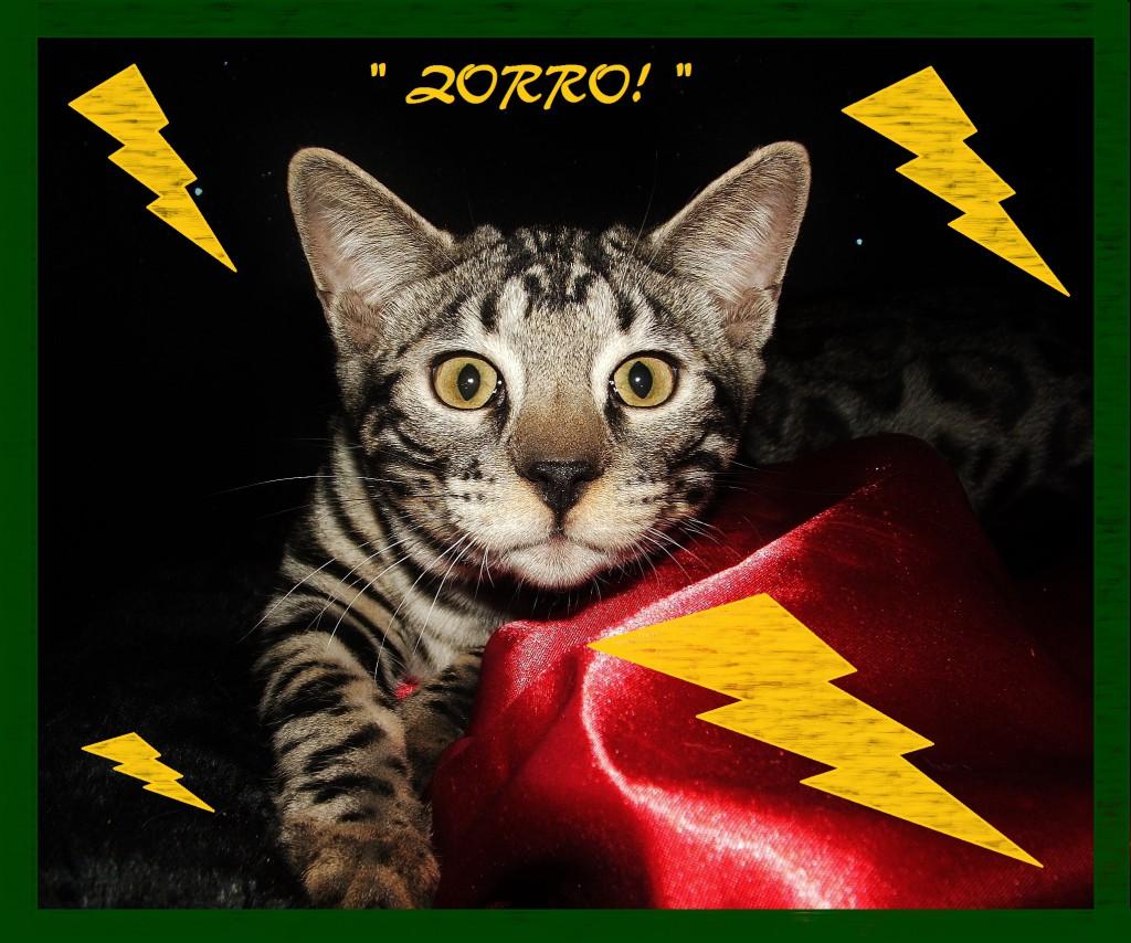 Zorro, great mug shot!