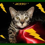 Zorro, great mug shot!
