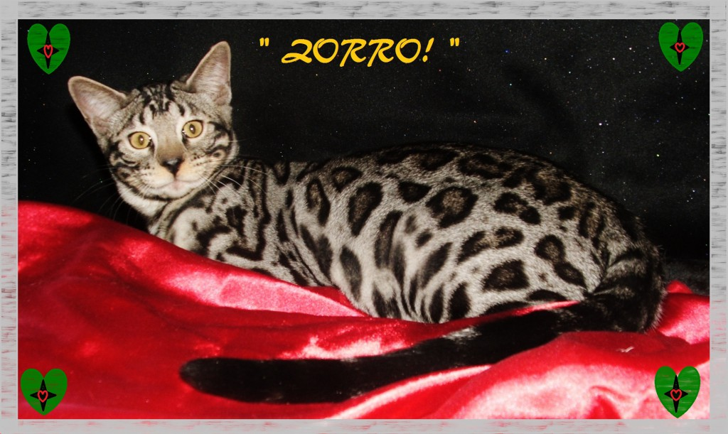 Zorro, in the silk!