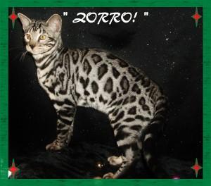Zorro, majestic