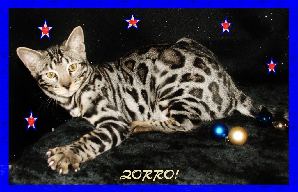 Zorro, who can resist you!