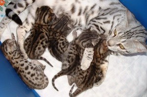 mama with kittens 4